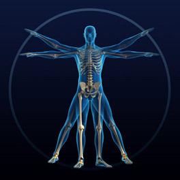 biomecanique du corps humain